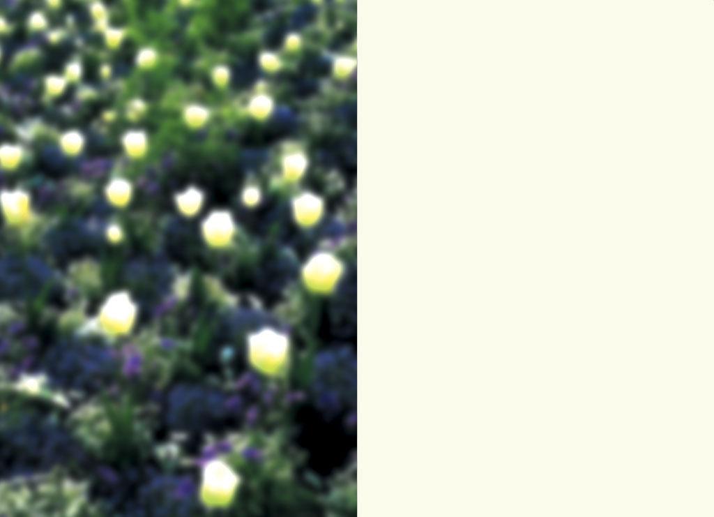 Claude Closky, 'Alyssum Myosotis', 2000, correspondance card. Dijon: Visual, 15  x 21 cm.
