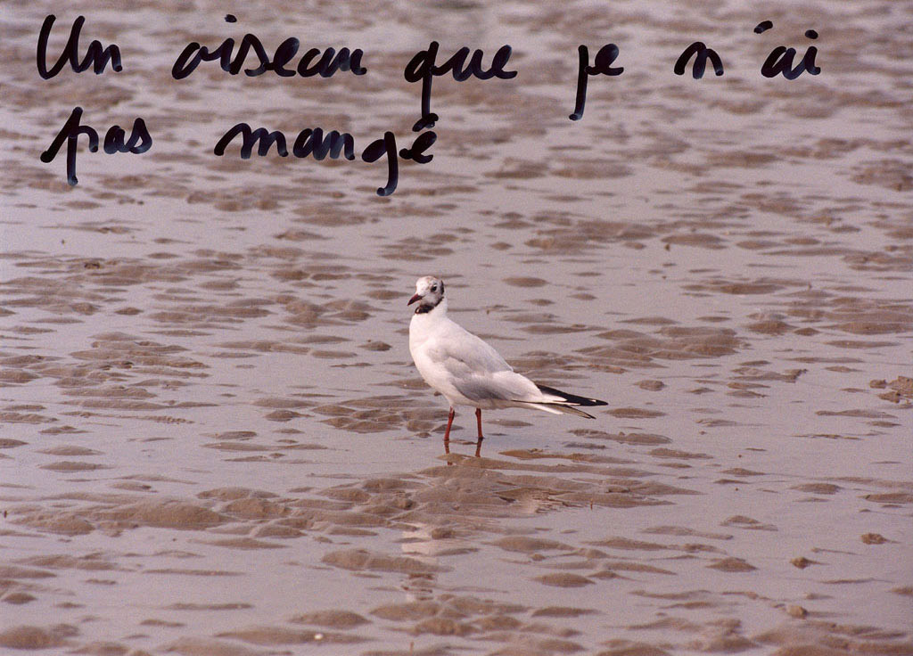 Claude Closky, 'Un oiseau que je n'ai pas mangé [A bird I haven't eaten]', 1995, c-print, permanent felt pen, 15,2 x 22,5 cm.